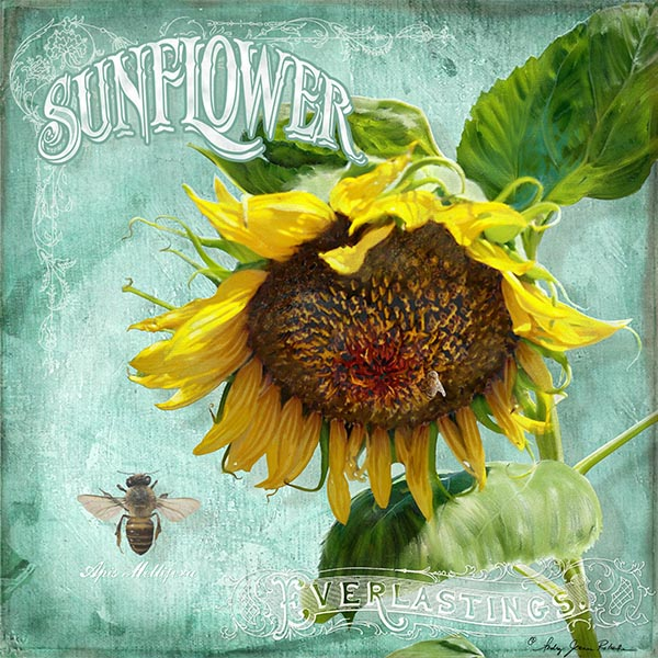 smAJR-ICON-Sunflower-heavy-head-1B